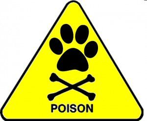 Toxic to Pets