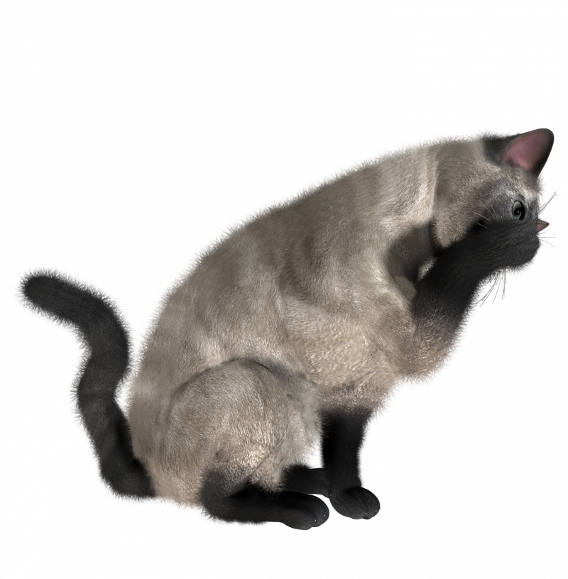 cat PNG1634