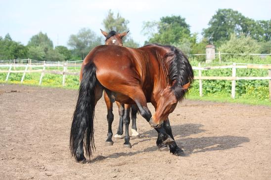 photodune 3194820 brown horse biting itself