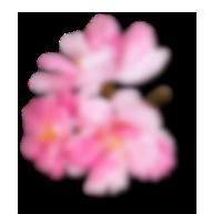 right side sakura small